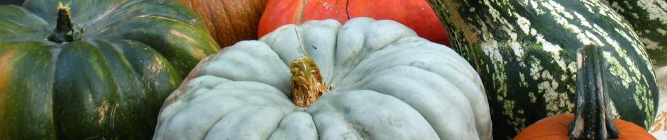 cropped-pumpkins1.jpg