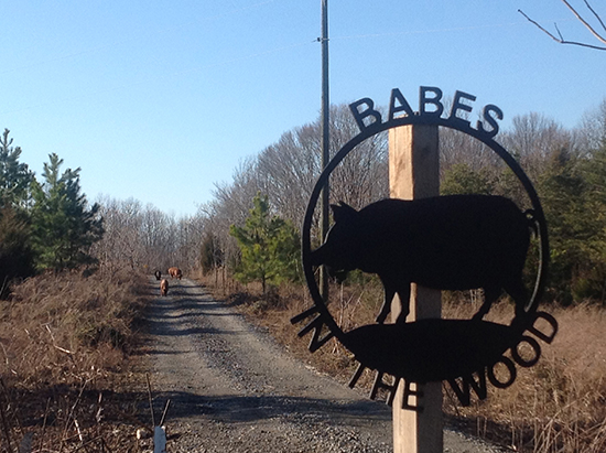 babes in the wood sign
