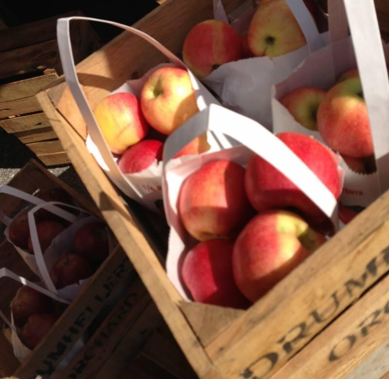 apples sotj