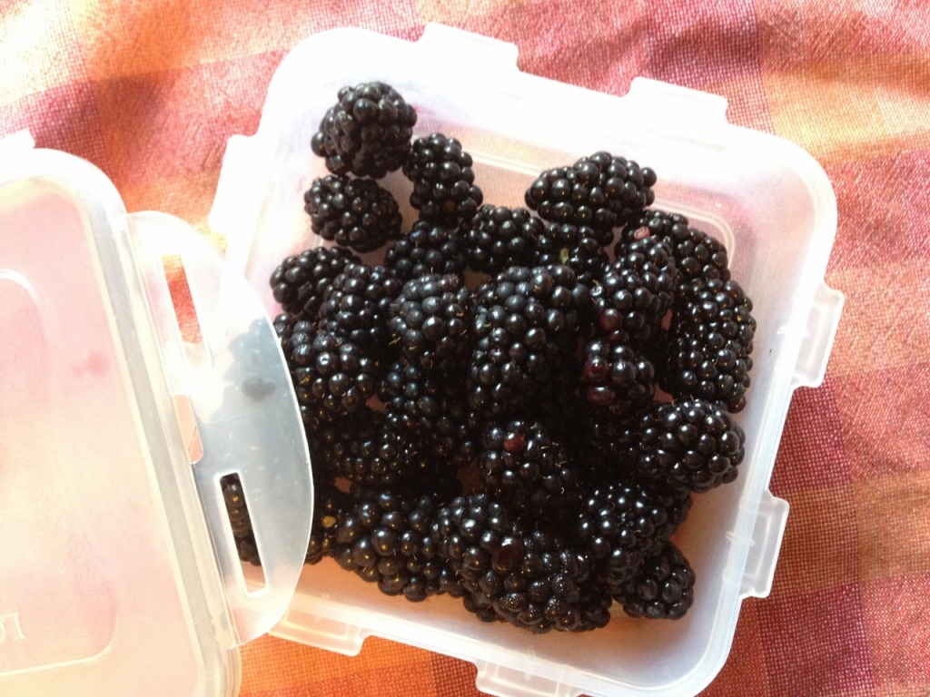 blackberries container tupperware (1) (1280x960)