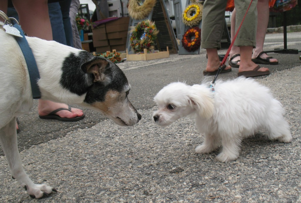 dogs at the farmers market