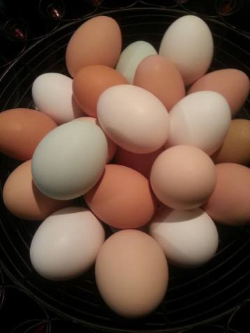 GrowRVA - Bella Grove Eggs