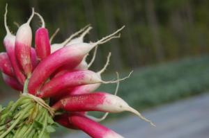 GrowRVA - Broadfork Farm Radishes