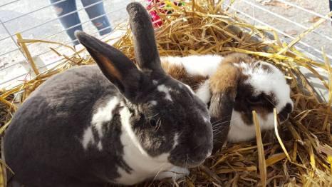 GrowRVA - Bunny Luv