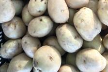 GrowRVA - Potato