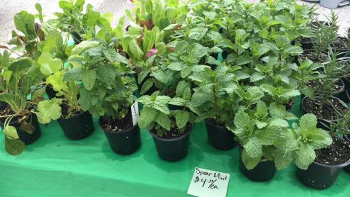 GrowRVA - Reyes Farm Mints Herbds