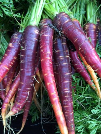 GrowRVA - Black Creek Farm Purple Carrots